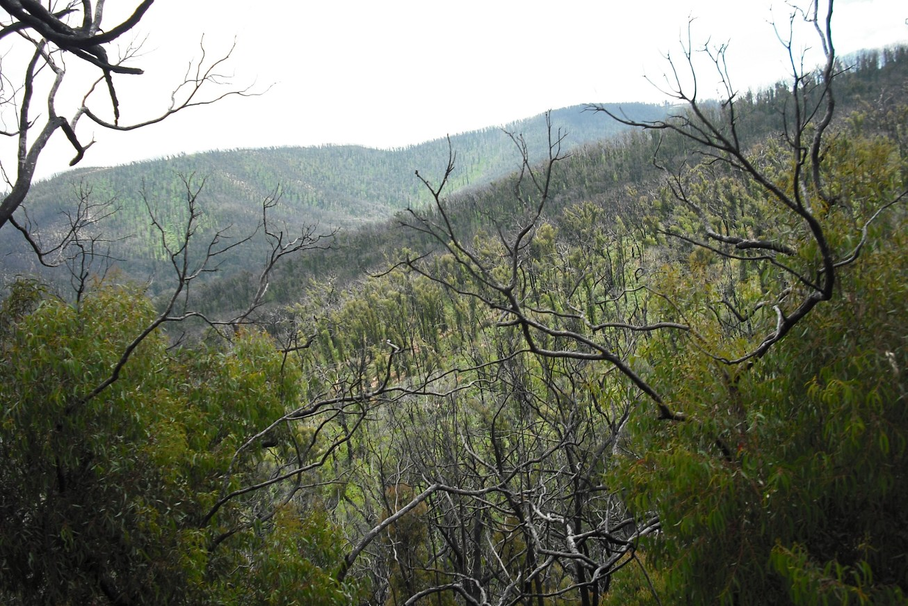 View from the Kinglake climb