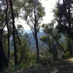 Reefton Spur ride (18.2.12) 017