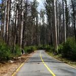 Reefton Spur ride (18.2.12) 043