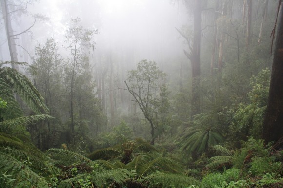 Mt. Donna Buang