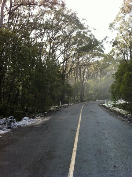 The final kilometre of the Mt. Donna Buang climb.