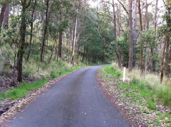 The upper slopes of Mt. Buninyong.