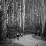 Reefton Spur Acheron Way ride Image 271