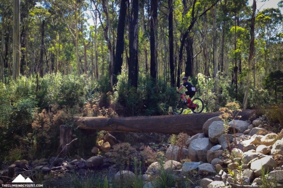 Rohan crosses one of the many log bridges on the lower section of the Delatite River Trail.