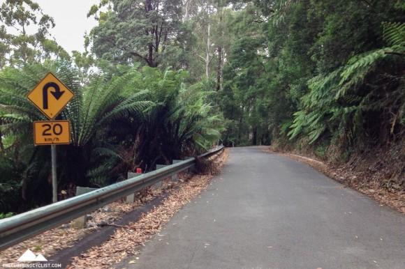 Climbing towards Beech Forest.