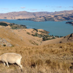 Cycling New Zealand 2015: the Port Hills of Christchurch