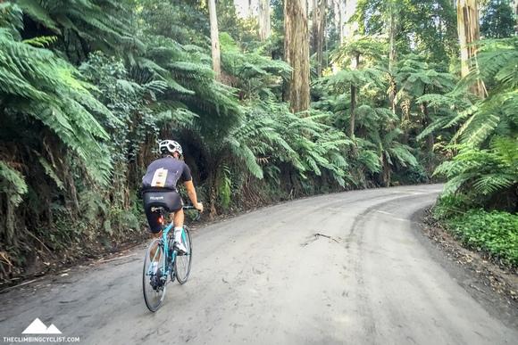 Upper Coonara Road in the Dandenongs.