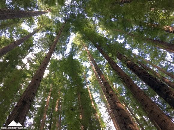 Inside the redwoods plantation.